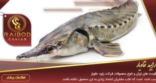 ماهی خاویار آسترا
